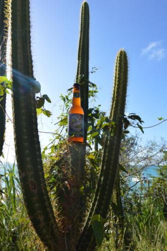 Verdus, bière au jus de raisin, cactus
