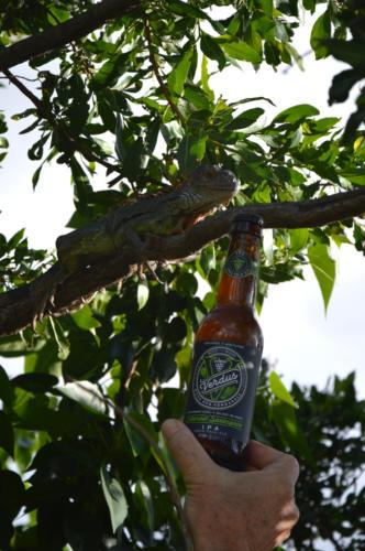 Verdus, bière au jus de raisin, Iguane
